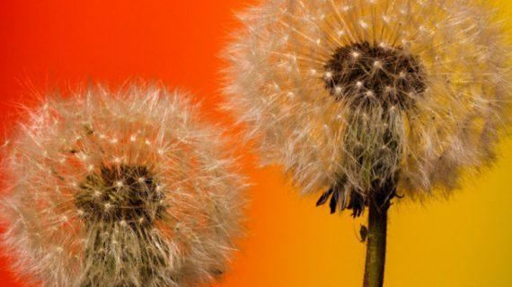 Ricomincia la primavera e la battaglia contro le allergie
