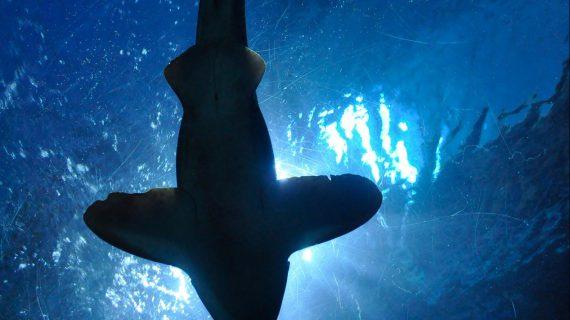 ORDEMAR – un aiuto dalle profondità del mare